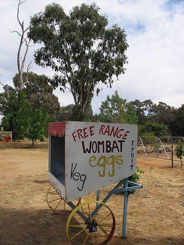 wombatEggs.jpg
